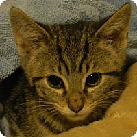 Adopt A Pet :: Gablotto - Acme, PA