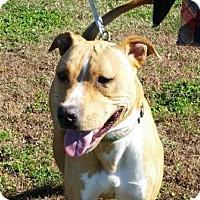 Adopt A Pet :: Blake - Huntingburg, IN