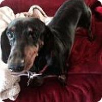 Adopt A Pet :: LADY - Atascadero, CA