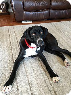 Labrador Retriever Mix Dog for adoption in New Oxford, Pennsylvania - Leigh