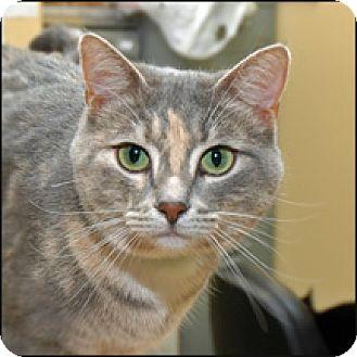 Domestic Shorthair Cat for adoption in Lovingston, Virginia - Mia