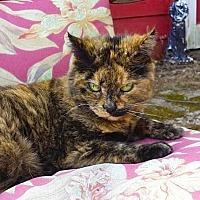 Adopt A Pet :: Karma - Oberlin, OH