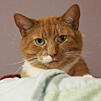 Adopt A Pet :: Twitch - New Richmond,, WI