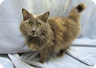 Domestic Longhair Cat for adoption in Lexington, North Carolina - MOONBEAM