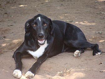 Labrador Retriever Mix Dog for adoption in Blanchard, Oklahoma - Arnold