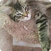Adopt A Pet :: Abraham - North Highlands, CA