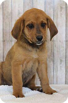 Hound (Unknown Type) Mix Puppy for adoption in Waldorf, Maryland - Ethan