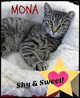 Domestic Shorthair Cat for adoption in Gettysburg, Pennsylvania - Mona