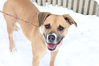 Pit Bull Terrier Mix Dog for adoption in Greensboro, North Carolina - Candy