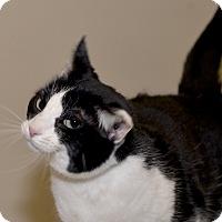 Adopt A Pet :: James May - Medina, OH