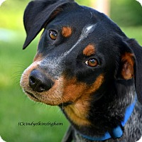 Adopt A Pet :: Shelby - Woodbury, NJ