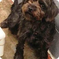 Adopt A Pet :: Harper - Oswego, IL