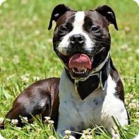 Adopt A Pet :: Danny - Lincolnton, NC