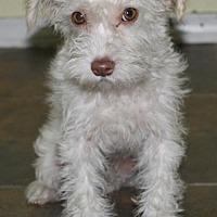 Adopt A Pet :: Hawaii: Honolulu - Palo Alto, CA