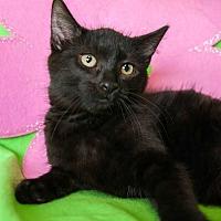 Adopt A Pet :: Lucky II - Muskegon, MI