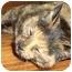 Photo 3 - Calico Cat for adoption in Victoria, British Columbia - Tortie