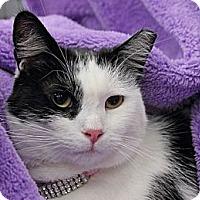 Adopt A Pet :: Quattro - Alexandria, VA