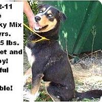 Adopt A Pet :: # 362-11 @ Animal Shelter - Zanesville, OH