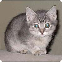 Adopt A Pet :: Dust Bunny - Davis, CA