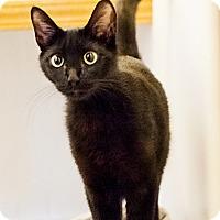 Adopt A Pet :: Mamacita - Shelton, WA