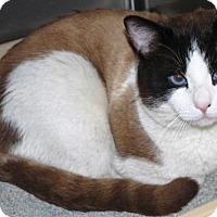 Adopt A Pet :: LaChat - Prescott, AZ