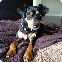 Adopt A Pet :: Mai Mai - Nashville, TN