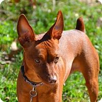Adopt A Pet :: Prince The III - Nashville, TN