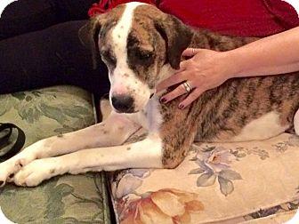 Terrier (Unknown Type, Medium) Mix Dog for adoption in Pataskala, Ohio - Lily