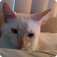 Adopt A Pet :: Angelo - Loveland, CO
