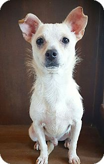 Terrier (Unknown Type, Small) Mix Dog for adoption in Fredericksburg, Texas - Peanut