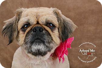 Pekingese Dog for adoption in Cincinnati, Ohio - Chloe