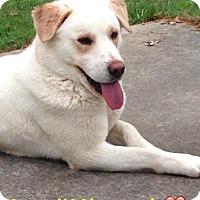 Adopt A Pet :: Cruz - Overland Park, KS