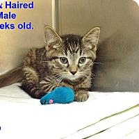 Adopt A Pet :: H-1 A - Triadelphia, WV