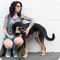 Adopt A Pet :: Chiko - Virginia Beach, VA