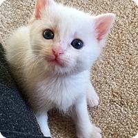 Adopt A Pet :: Fern - Acworth, GA