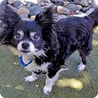 Adopt A Pet :: RIO - San Francisco, CA