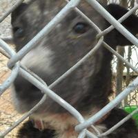 Adopt A Pet :: Betty - Opelousas, LA