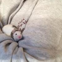 Adopt A Pet :: California - Edmonton, AB