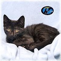 Adopt A Pet :: Garfunkel - Howell, MI