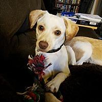 Adopt A Pet :: Coco#2 - Sparta, NJ