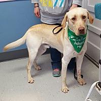 Adopt A Pet :: Yadi - Maryville, IL