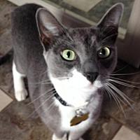 Adopt A Pet :: Rocky - Alamogordo, NM