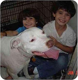 American Bulldog/American Pit Bull Terrier Mix Dog for adoption in Houston, Texas - Jodi