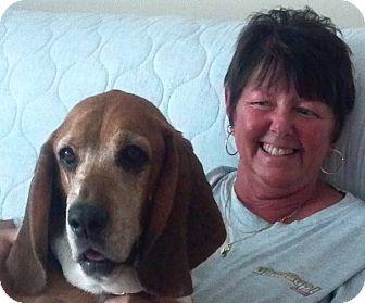 Basset Hound Dog for adoption in Plain City, Ohio - George Washington