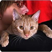 Adopt A Pet :: Cinders - Nashville, TN
