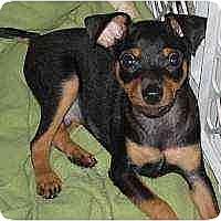 Adopt A Pet :: Starbuck - Summerville, SC