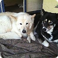 Adopt A Pet :: Kiara - Canoga Park, CA
