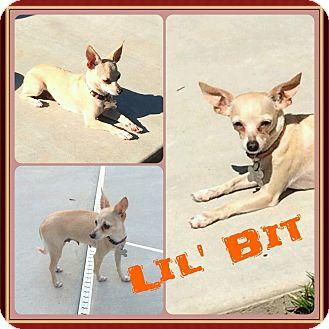 Chihuahua Dog for adoption in Newnan, Georgia - Lil Bit