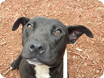 Hound (Unknown Type) Mix Dog for adoption in Thomaston, Georgia - Eli