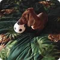 Adopt A Pet :: Arlo - Homewood, AL